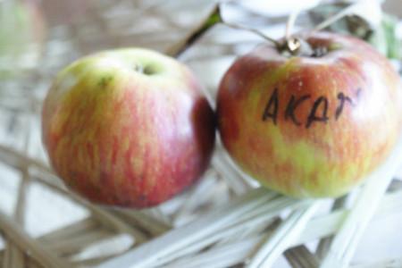 Poze Măr Akane