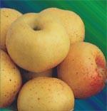 Poze Măr Pătul