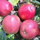 Măr Braeburn