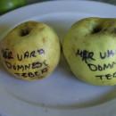 Măr de vară domnesc Țebea