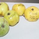 Măr Dulce de Deuș