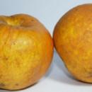 Măr Răpănos
