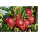 Măr Romus 3