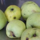 Măr Botane