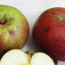 Măr roșii de Țebea