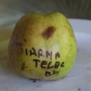 Măr de iarnă Teleac