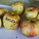 Măr dungat de Mădrigești