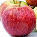 Măr Empire