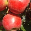 Măr Ariane
