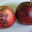 Măr dulciu vărgat de Țebea