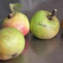 Măr Vanilie (Bomboane)