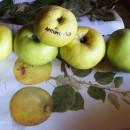 Măr Antonovka