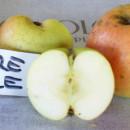 Măr Pătul de Vața