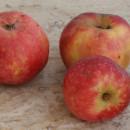 Măr roșii de vară