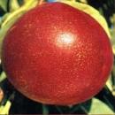 NectarinFlavortop