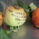 Măr de vară 2 Marilena