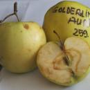 Măr Gulderling Auriu