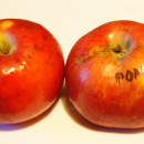 Măr Popești