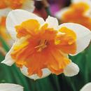 Narcisa Orangery (set 3 buc.)