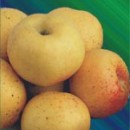 Măr Pătul