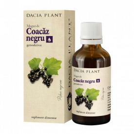 Coacaz negru muguri 50ml Dacia Plant