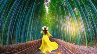 De la papirus la bambus – o poveste despre absorbante