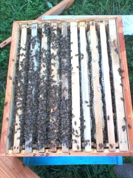 Bees swarms for sale images