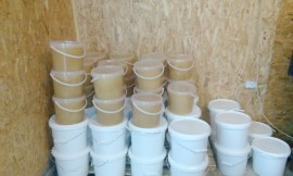Raw Natural pure Tilia (linden) Honey in pails of 10 litters (13.5 kg)