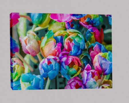 Lalele multicolore