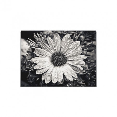 Tablou Canvas Black An White flower