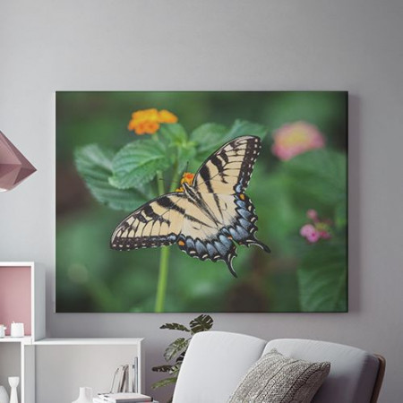 Tablou Canvas Pastel butterfly