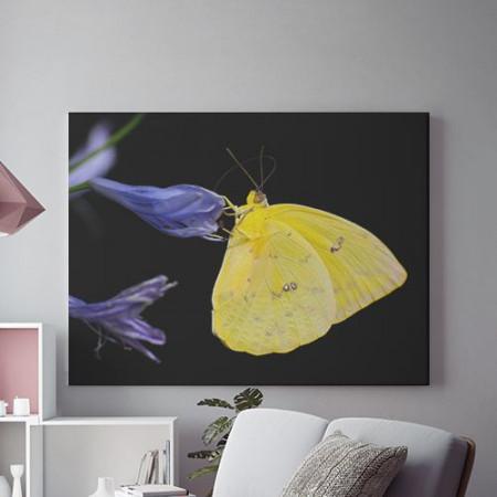 Tablou Canvas Fluture galben