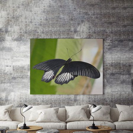 Tablou Canvas Fluture negru