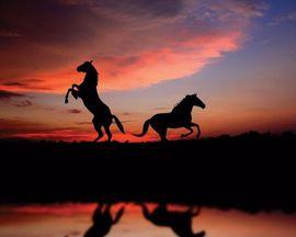 Tablou canvas - apus cu 2 cai