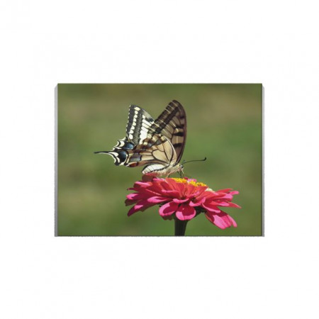 Tablou Canvas Fluture pe floare
