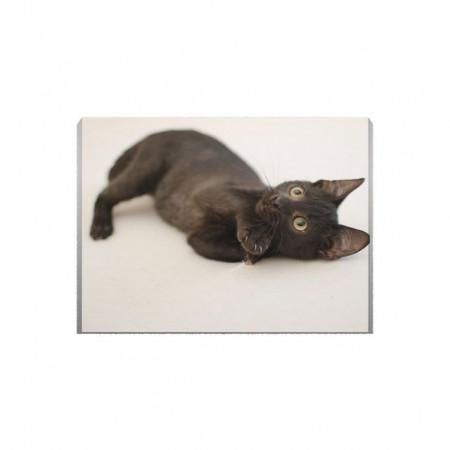 Tablou Canvas Little Black Cat