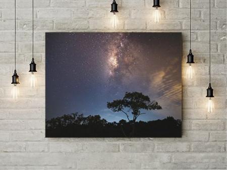 Tablou Canvas Noaptea In Jungla
