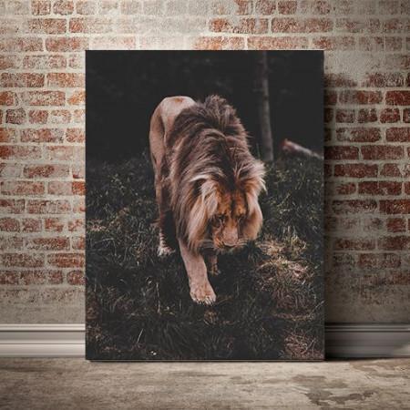 Tablou Canvas Regele junglei