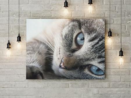 Tablou Canvas Blue Eyes