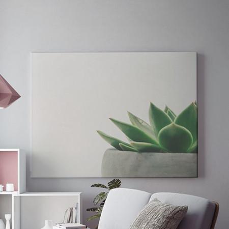 Tablou Canvas Planta decorativa
