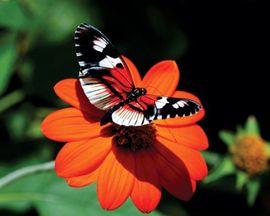 Tablou canvas - fluture si floare