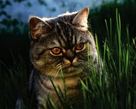 Tablou canvas - Pisici 06