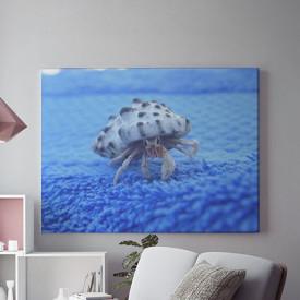 Tablou Canvas Crab