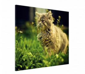 Tablou canvas - Pisici 01