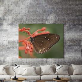 Tablou Canvas Fluture negru pe floare