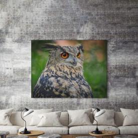 Tablou Canvas Grey owl