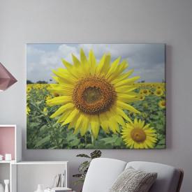 Tablou Canvas Sora soarelui