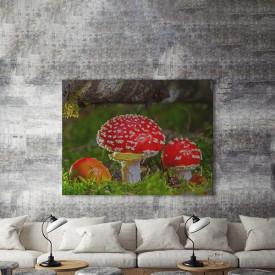 Tablou Canvas Ciuperci rosii