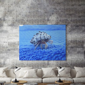 Tablou Canvas Crab