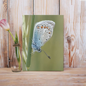 Tablou Canvas Soft butterfly